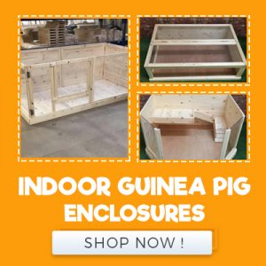 INDOOR GUINEA PIG ENCLOSURES