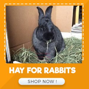 HAY FOR RABBITS